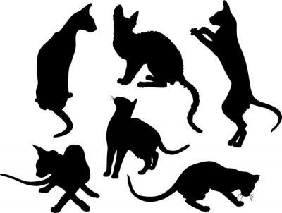 Anisp92 pochoir ensemble de chats style pochoir