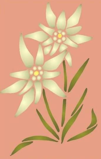 Fl188 pochoir fleur plante 2 edelweiss 1