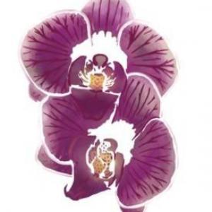 Fle87 pochoir 2 orchidees a peindre style pochoir