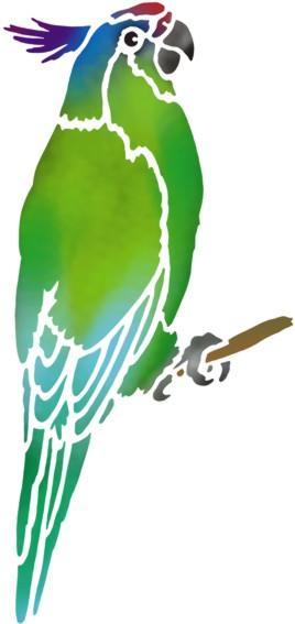 Perruche 3 perroquet oiseau pochoir a peindre