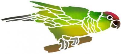 Perruche perroquet oiseau en pochoir