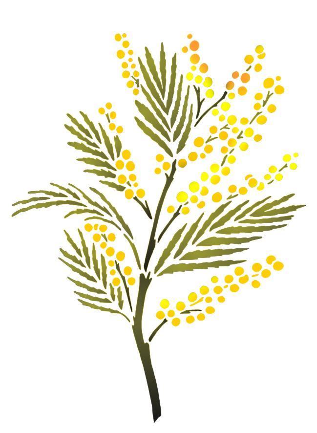 Spf046 branche mimosa pochoir
