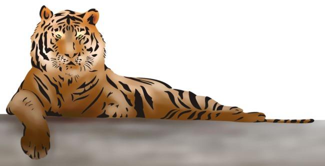 Stipo1445 pochoir tigre en 2 parties pochoirs a superposer style pochoir
